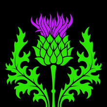 Thistle Flower In A Flat Style