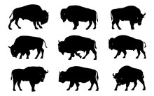 Bison Silhouettes 2018