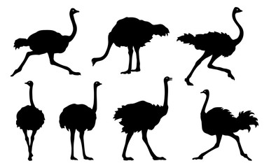 ostrich silhouettes 2018