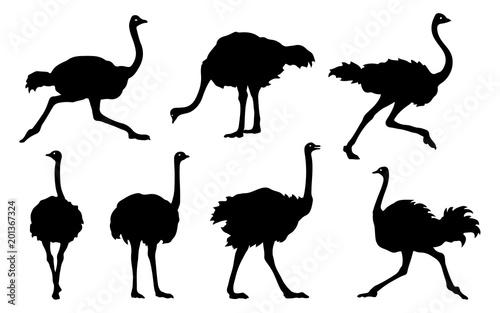 Fotografía ostrich silhouettes 2018