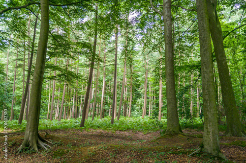 Wall Murals Forest Forest in Belgium