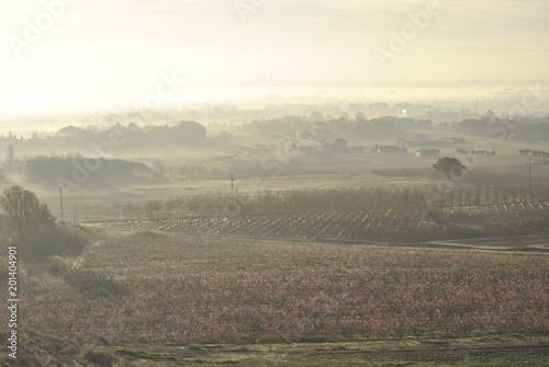 Paisaje de frutales, olivos, al amanecer, al alba, en primavera.