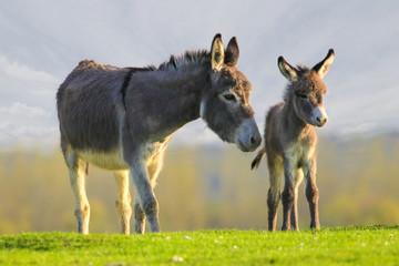 Slatka beba magarica i majka na cvjetnoj livadi