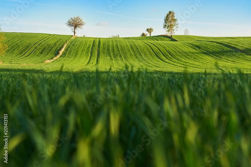 Fotobehang Cultuur Zielone pola na wzgórzach