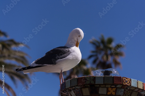 Seagull on a fountain. Poster