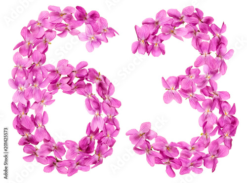 Poster  Arabic numeral 63, sixty three, from flowers of viola, isolated on white backgro