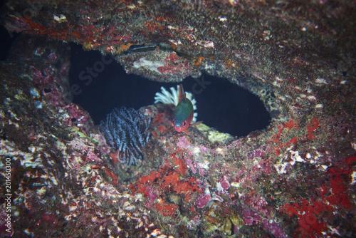 Plakat Ryba na podwodnej rafie koralowej