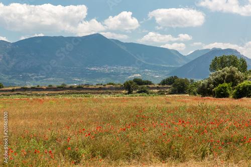Fototapeta The panorama, Paestum, Italy. obraz na płótnie