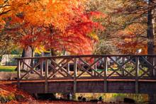 Wooden Bridge In Bushy Park Wi...
