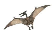 Flying Pterodactyl Dangerous Creature Of Jurassic Period