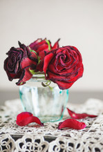 Still Life With Dry Red Roses ...