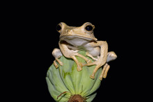 Close Up Of Frog Sitting On Pl...