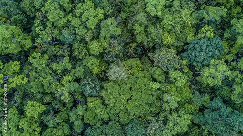 Aerial top view forest, Texture of forest view from above. - 201488118