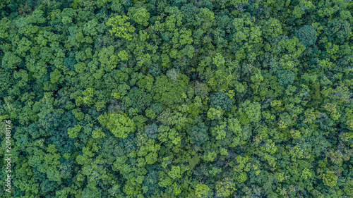 Obraz na plátně  Aerial top view forest, Texture of forest view from above.