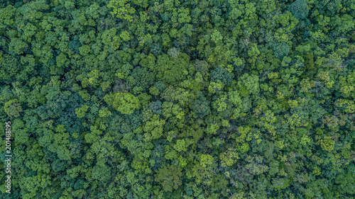 Aerial top view forest, Texture of forest view from above. - 201488195