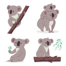 Cute Koala Bear With A Baby On...