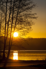 tree silhuette in sunrise over lake with reflection and yellow sky