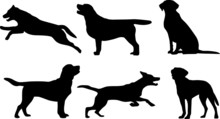 Labrador Retriever - Silhouetten