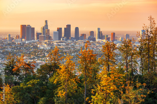 Fototapeta Los Angeles los-angeles-za-drzewami