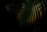 zielone i żółte liście palmowe w lesie - 201513347