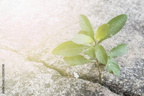 Photo  New growing life,Strong grass survive and growth in concrete ground