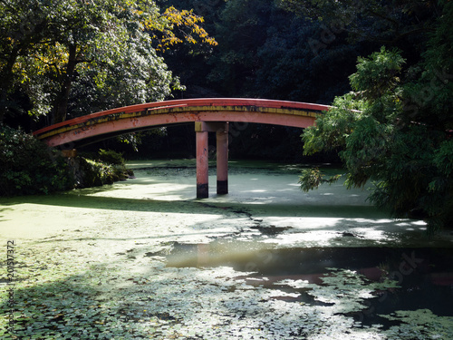 Fotografie, Obraz  Sunlit Japanese garden with green pond and red arching bridge at Usa shrine in O