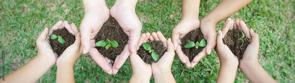 Fototapety, obrazy: Children hands holding sapling in soil surface plant, spring or summer time, Multicultural hands of children and adult with plant, Green environment cultivate and earth day concept banner (blur)