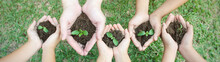 Children Hands Holding Sapling...