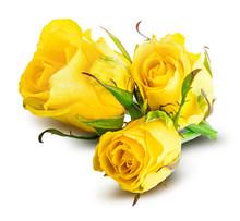 Fresh Yellow Rose Isolated On ...