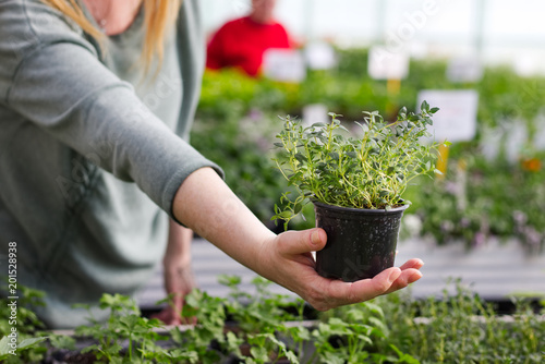 Woman pick out potted thyme at garden center