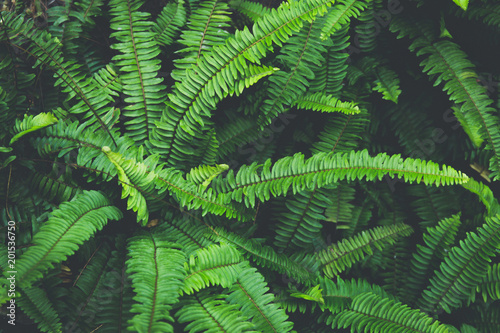 Tropical natural green fern leaf background in dark vintage tone
