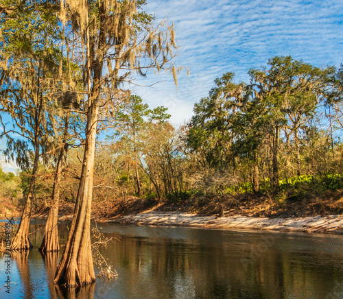 Photo The Suwanee river in White Springs Florida, a blackwater river flowing out of the  Okefenokee Swamp in southern Georgia, USA