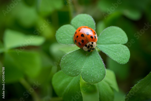 Happy New Year - Ladybug on clover Poster Mural XXL