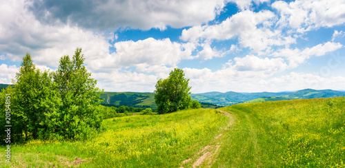 Foto op Aluminium Platteland country road through grassy meadow on hillside. beautiful summer scenery of Carpathian mountains. gorgeous cloudscape on a blue sky