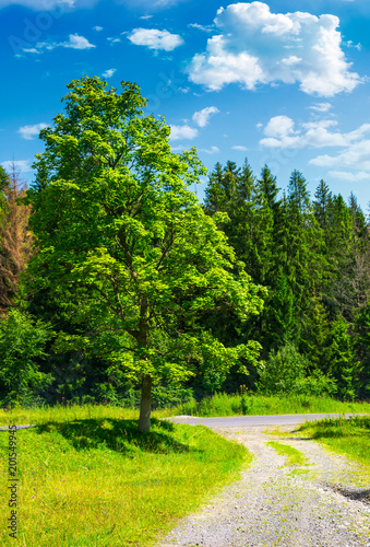 In de dag Lime groen country road through the forest on a grassy meadow. beautiful summer landscape of Carpathians