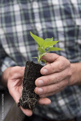 Papiers peints Vegetal Man holding pepper plant