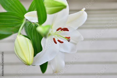 Poster Lelietje van dalen white lily flower and bud