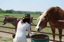 Woman Feeding A Horse In North Texas