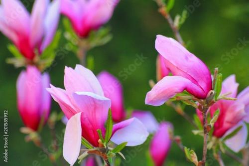 Fototapeta kwiaty płatki kwiatów obraz