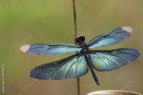closeup colorful dragonfly