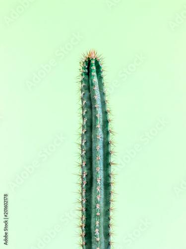 Papiers peints Cactus Cactus.Fashion Design. Minimal Stillife. Trendy Bright Colorful.