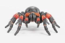Realistic 3D Render Of Tarantula