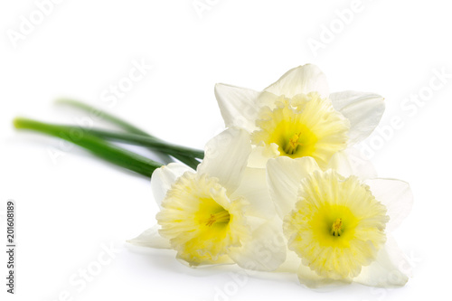 La pose en embrasure Narcisse Beautiful daffodils isolated on white background. Spring flowers bouquet