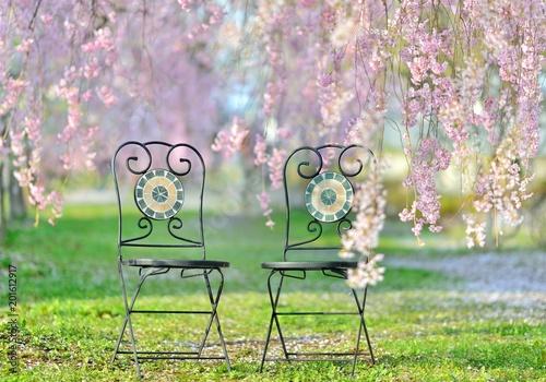 Foto op Canvas Lichtroze 桜の森・椅子のある風景