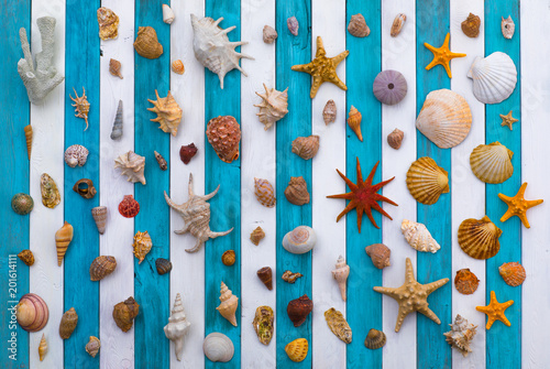 Poster collection of sea shells on a white blue wooden background