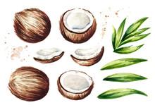 Coconut Elements Set. Watercol...