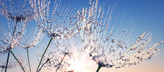 Panel Szklany Podświetlane Wschód / zachód słońca Pusteblume mit Tautropfen