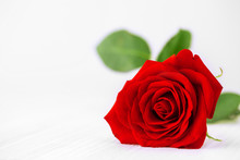 Single Red Rose Background