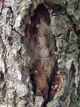 Just Bark On A Tree. Beautiful Structural Surface Of The Bark On Different Trees. The Scarecrow Forest Watching Us.