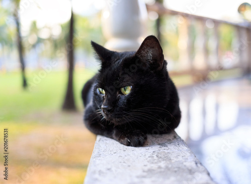 Photo  Beautiful black cat lounges lazily on a porch rail at sunset
